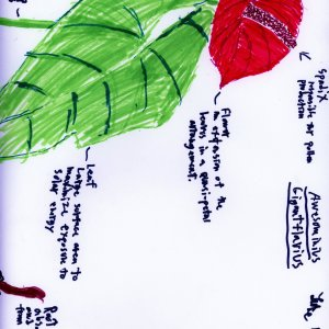 Students at a Youth-In-Custody facility learned about scientific names, plant parts, and botanical illustrations and then drew their own botanical artwork.