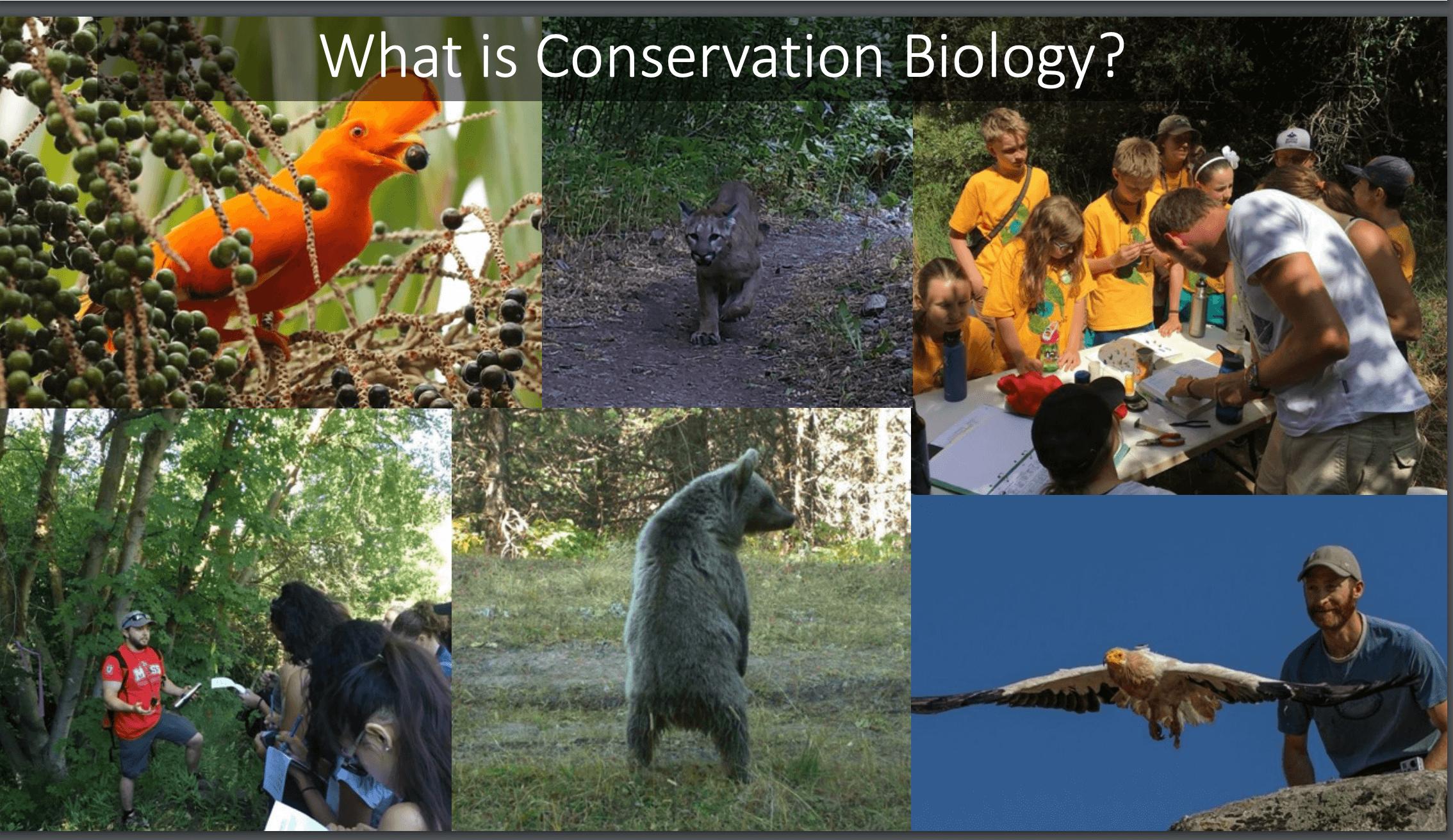 Wildlife Conservation with Austin Green